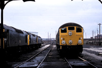 A class 24 and some Class 25s outside the shed.